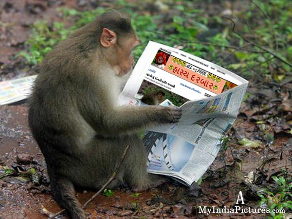 monkey-reading_1