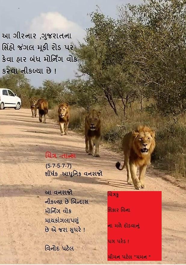 Lion GIR