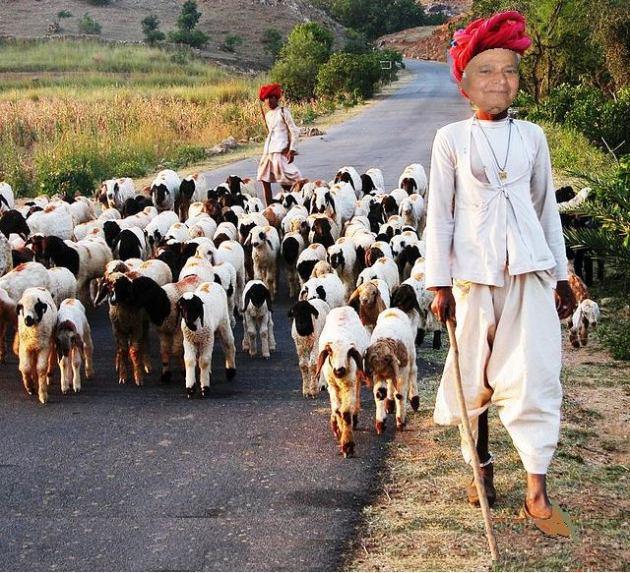 DV-shepherd